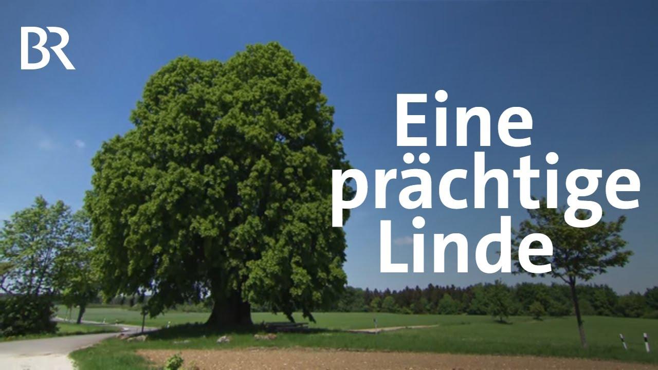 Der Baum Der Bayern Große Linde Bei Teuchatz Youtube