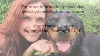 Rescue Rottweiler Learns Basic Obedience And Advanced E Collar Training
