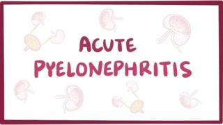 Acute pyelonephritis (urinary tract infection) - causes, symptoms & pathology