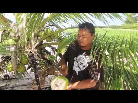 Tuvalu Funafuti conservation area Dégustation d'une noix de coco / Tuvalu Eating coconut