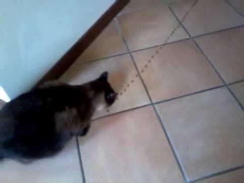 Gatto segue strada di crocchette