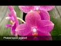 Unboxing - Orchid Haul from Orchideen Wichmann & Elsner Orchids + Bloom/Spike Update - February 2017