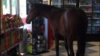 Meanwhile in Russia  Horse comes to a corner shop, customers unfazed