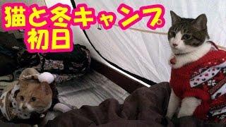猫連れ冬キャンプ♪初日【キャンプ猫こむぎ&だいず】2016.11.12