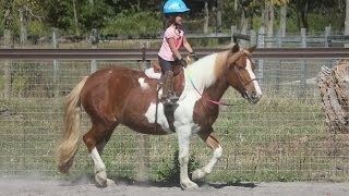 Kidproof Beginner pony for off farm lease$4500/yr