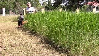 Mowing tall thick grass 16