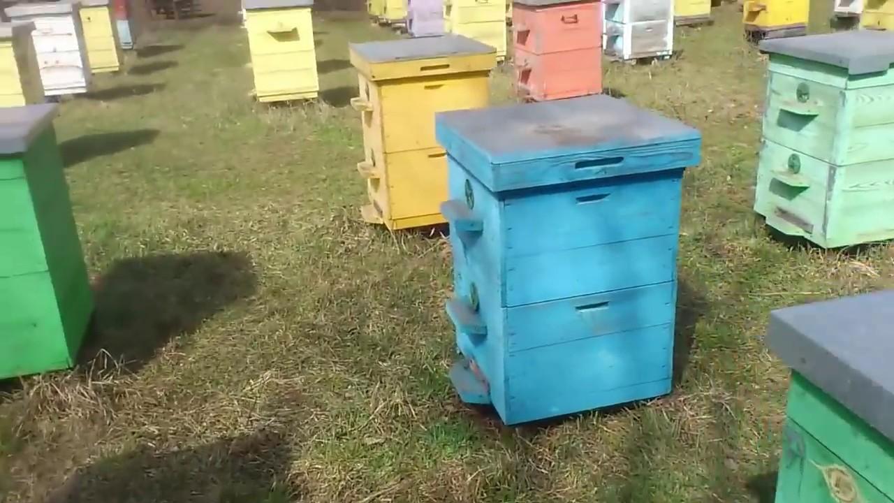 Сила пчелиной семьи весной имеет решающее значение