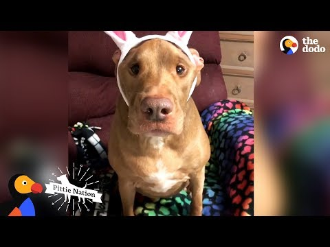 Dog Who Wasn't Supposed To Survive Is Completely Transformed By Love | The Dodo Pittie Nation