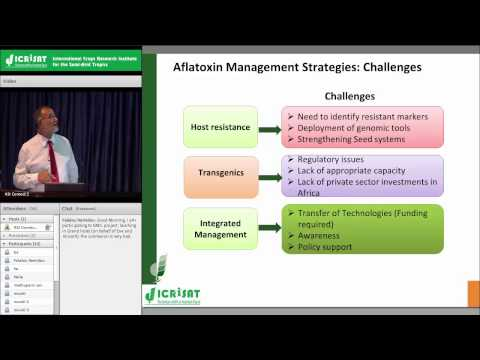 Overview and Future Prospects of Aflatoxin Research at ICRISAT