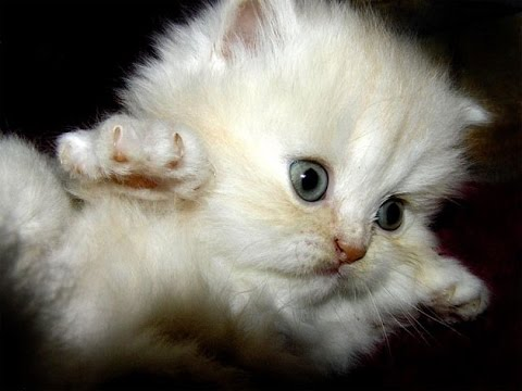 Best funny and cute cat videos compilation.