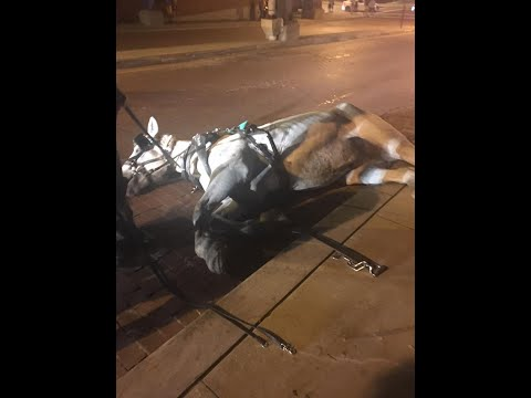 Horse drawn carriage company faces backlash on social media after photos surface online