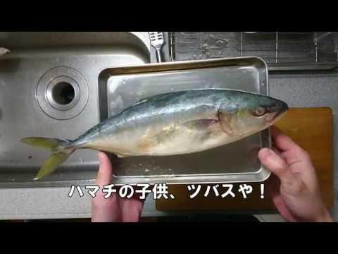 魚捌き動画No,001 ツバスを捌いてみた!