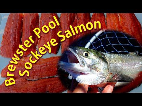 Brewster Pool Sockeye Salmon