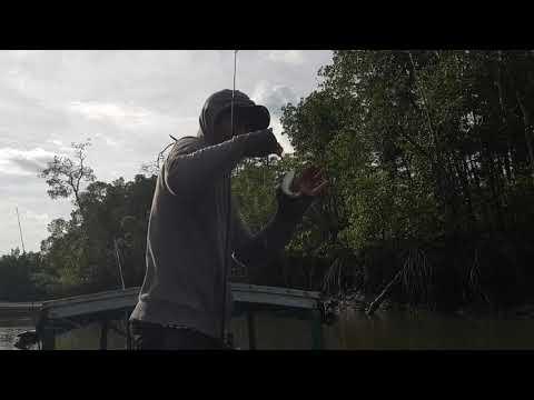 rasanya-seperti-mancing-di-pasar-ikan-part.1-#-ikan-predator-hutan-mangrove-bintuni