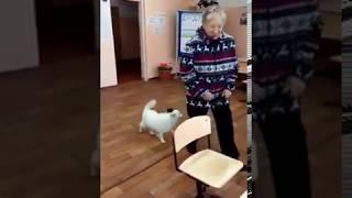 Собака-голосовака на избирательном участке в Бурятии