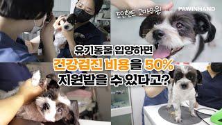 유기동물 입양하면 건강검진 비용을 50% 지원받을 수 …