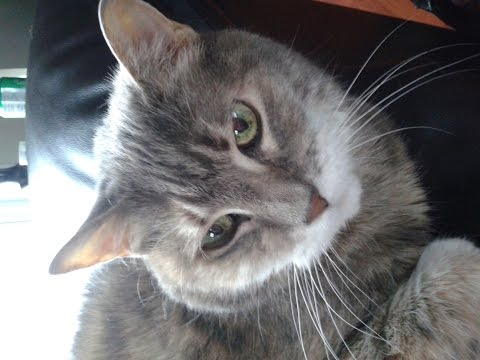how-to-give-insulin-to-your-diabetic-cat