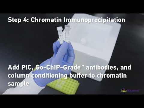 BioLegend: Chromatin Immunoprecipitation (ChIP) Protocol