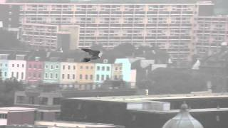 Gambar cover Urban Peregrine Falcon, Bristol City Centre, 24th September 2013
