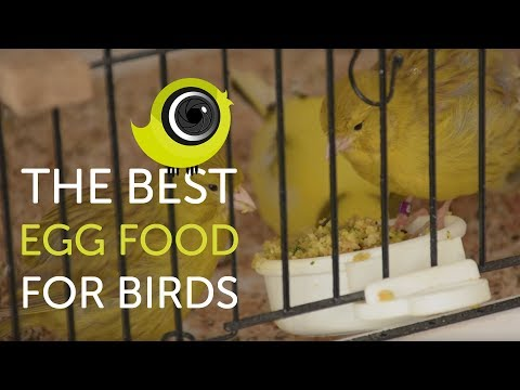 How to make the BEST egg food for birds | The Canary Room TV Exclusive