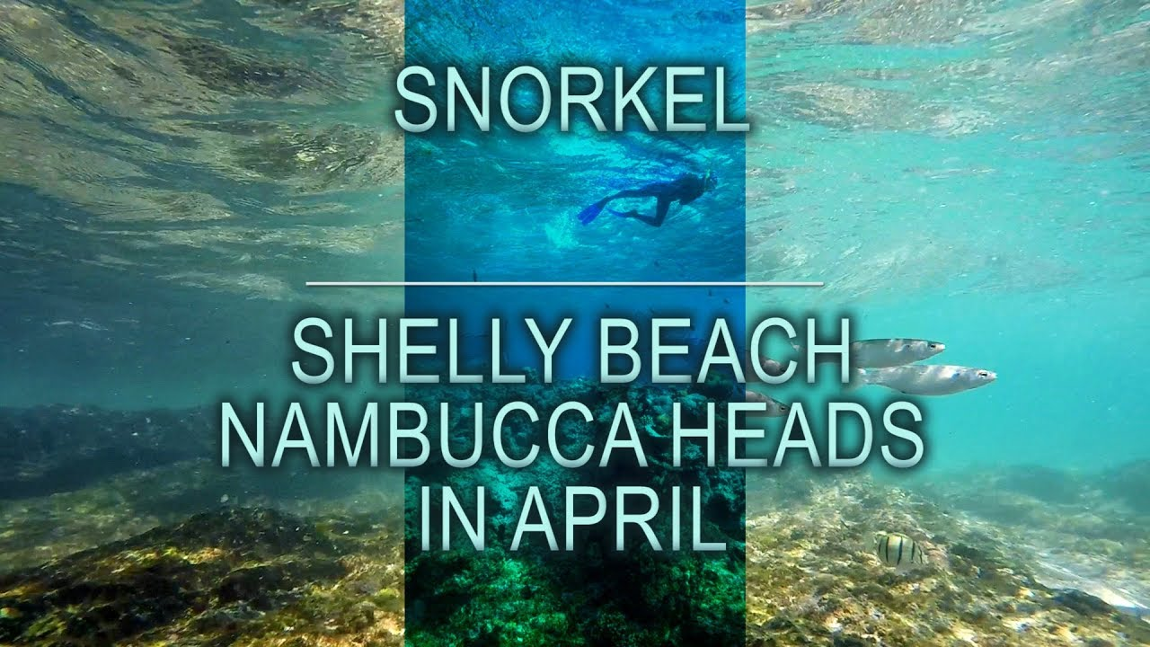 Snorkelling Shelly Beach Nambucca Heads in April