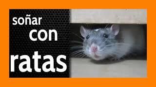 Soñar con Ratas 🐀 Cuídate de ESTAS COSAS !!!!!