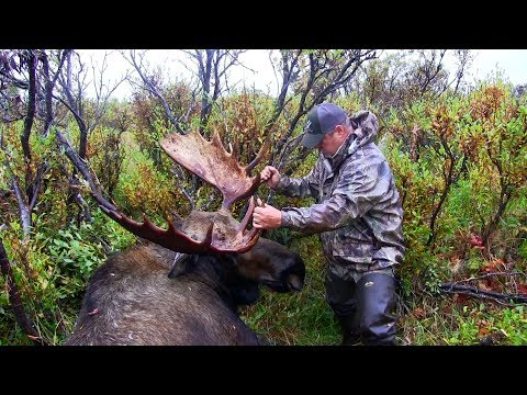 HOW TO PLAN A MOOSE HUNT!
