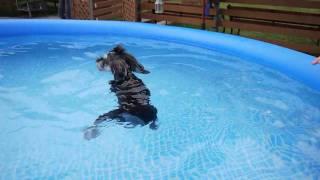 2010 7.25 3-2-WAN! はじめて泳がせてみたら スイスイ泳ぎました~