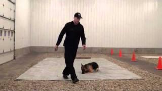 Katie (german Shepherd) Boot Camp Level Iii. Dog Training