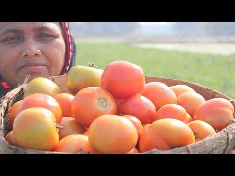 FARM FRESH Tomato Chutney Recipe Delicious Spicy & Sweet Tomato Khata Cooking Village Food