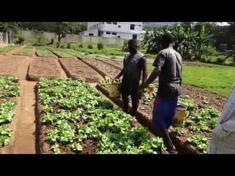 Know about Vegetable Farming in Accra