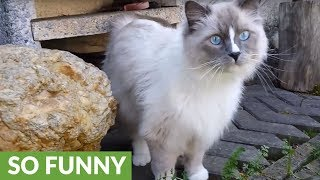 Bewildered cat experiences the outdoors for the first time