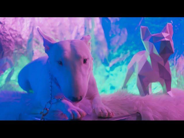 NO SIR E - Terra Firma Music Video