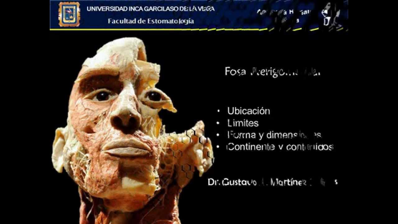 Fosa Pterigomaxilar; Anatomía Humana Aplicada_UIGV7 - YouTube