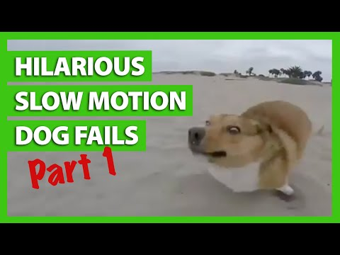 Hilarious Slow Motion Dog Fails