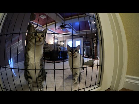 Can Jackson Galaxy Stop The Violence In This Feuding Cat Family?