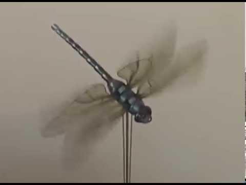 Dragonfly Automaton