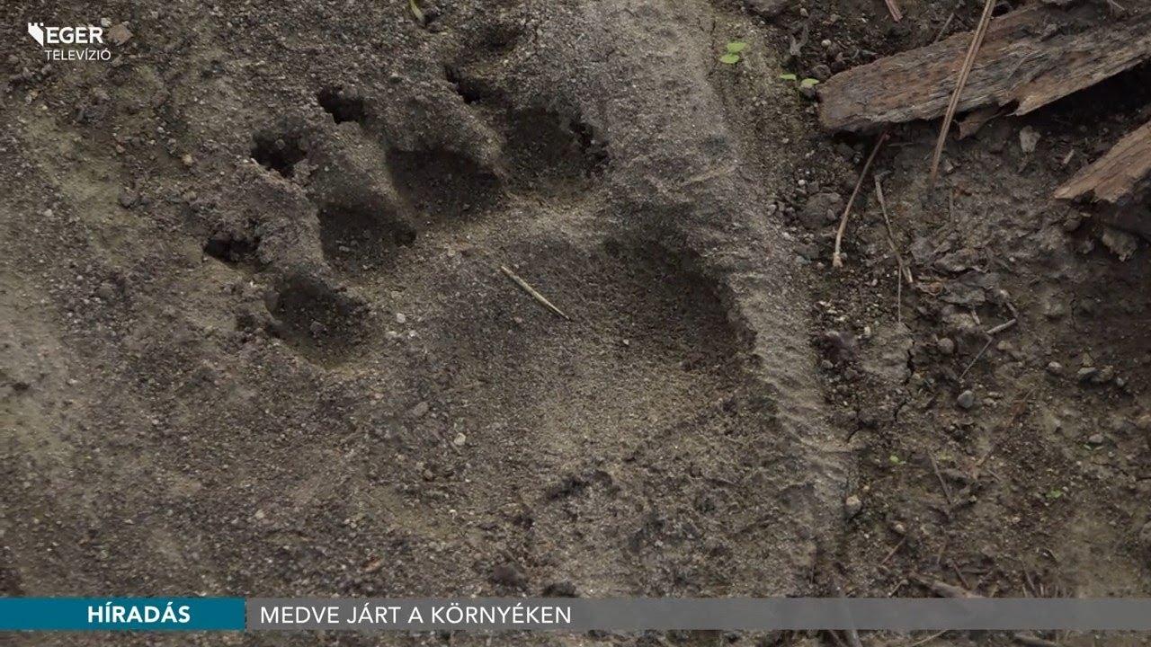 Medve hús paraziták. A Magyarországon előforduló féregfertőzések