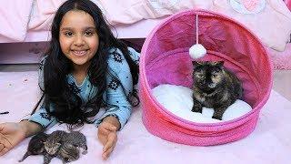 قطة شفا ولدت !! Cat gives birth kittens