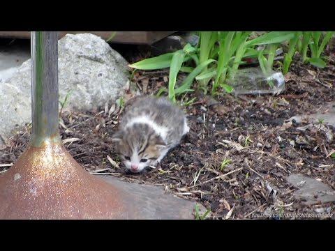 *READ DESCRIPTION* Abandoned kitten, after being dumped on sidewalk by Mom,  Kensington Market. '16