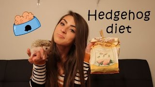What to feed your hedgehog!