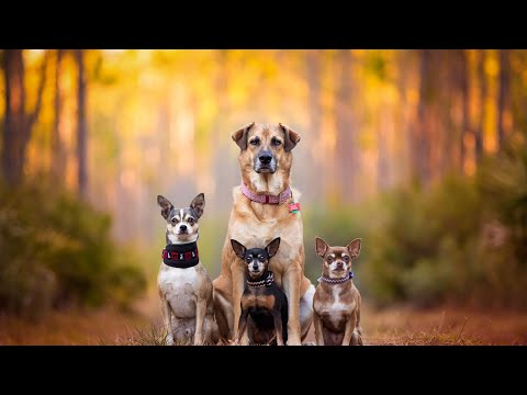Best Price of Dogs in 2019 with Facts