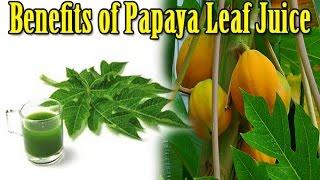Nine Incredible Benefits of Papaya Leaf Juice