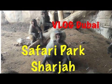 VLOG Дубай/Едем в Сафари Парк в Sharjah/Wild life safari park Sharjah