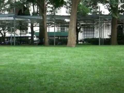 Madison Square Park 2