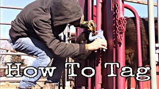 How To Apply A Ear Tag To Cows/Calves