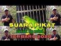 Suara Pikat Cucak Ijo Mini Terbaru   Mp3 - Mp4 Download