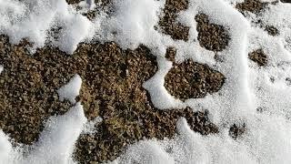 Как выглядит газон зимой