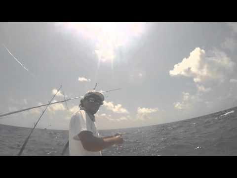 Deep Sea Fishing Sailfish In Riviera Maya, Captain Rick's.