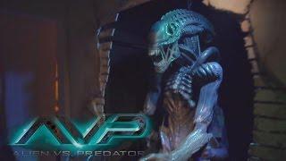 Alien vs Predator (COLOR!!) Halloween Horror Nights 2014 Universal Studios Hollywood